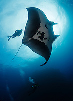 qt2450-D. Manta Ray (Manta birostris) and scuba diver (model released). Baja, Mexico, Pacific Ocean.<br /> Photo Copyright &copy; Brandon Cole. All rights reserved worldwide.  www.brandoncole.com