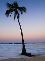 A palm tree enveloped by a wave at sunset, with the moon in the distance, Honl's Beach, Kailua-Kona, Big Island.