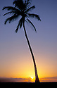 Coconut Palm tree silhouetted at sunset; Magic Island, Ala Moana Beach Park, Honolulu, Oahu, Hawaii.