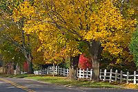 Southampton,  New York, Fall, Cobb Road, South Fork, Long Island