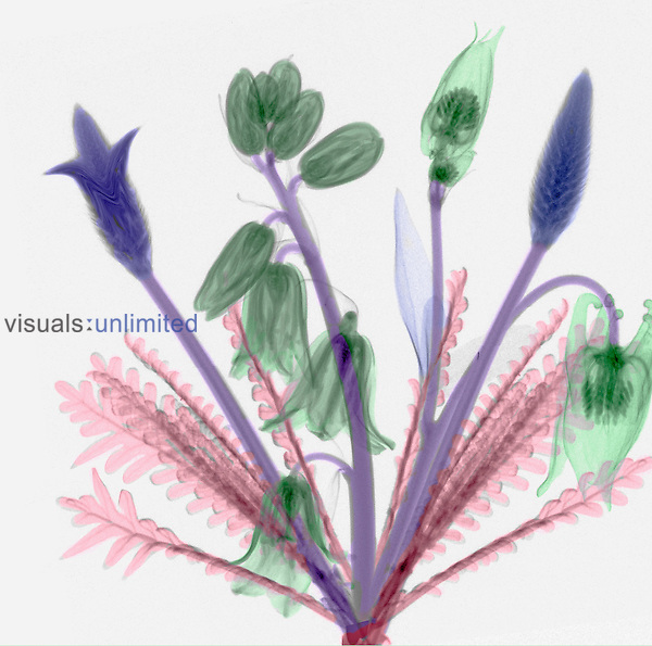 X-ray of a bouquet, a mixture of flowers and ferns