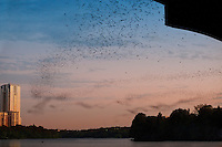 Sunset Bat Watching on Lake Austin is a amazing spectacle to see at The Ann W. Richards Congress Avenue bridge in downtown Austin is the spring and summer home to some 750,000 bats with up to 1.5 million bats at the peak of the bat-watching season. It's the largest urban bat colony in North America.