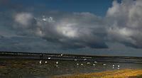 Baie de Somme (France)