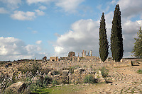 View of the South East quarter of Volubilis dwarfed by 2 cypress trees, with the House of Orpheus and the Capitoline Temple and Basilica in the distance, Volubilis, Northern Morocco. Volubilis was founded in the 3rd century BC by the Phoenicians and was a Roman settlement from the 1st century AD. Volubilis was a thriving Roman olive growing town until 280 AD and was settled until the 11th century. The buildings were largely destroyed by an earthquake in the 18th century and have since been excavated and partly restored. Volubilis was listed as a UNESCO World Heritage Site in 1997. Picture by Manuel Cohen