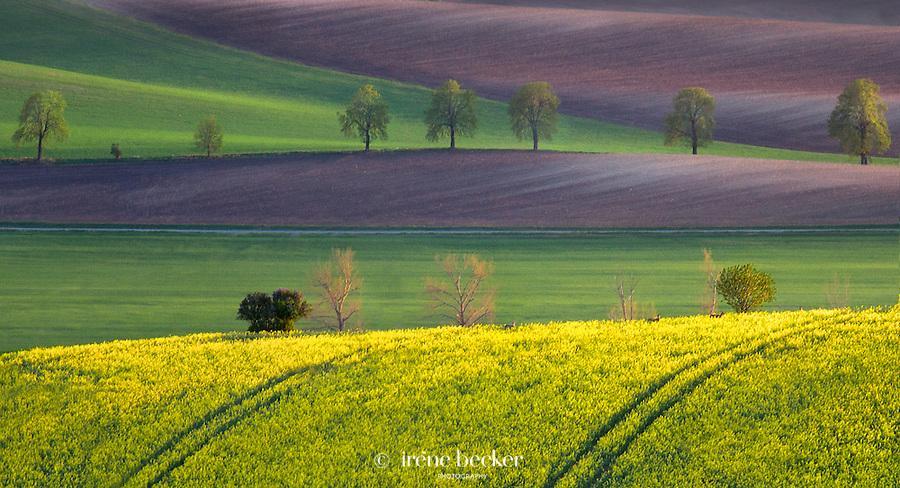 Dream  Land<br /> Landscape near town of Jihomoravsk&yacute; at afternoon light, Moravia, Czech Republic.