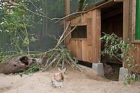 Außenvoliere, Voliere, Gehege für Zwergkaninchen, Zwerg-Kaninchen, artgerechte Tierhaltung, Untergrund aus Sand zum Graben, Zugang zu überdachtem Stall, dwarf rabbit