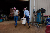 John Stuedemann (right) and his helper work with his cattle in Comer, Ga. on Monday, Sept. 25, 2006. Stuedemann says he applies techniques with his cattle that he has learned since childhood in Iowa, such as positive reinforcement, minimal occurrences of pain or fear, and calm motions and speech.