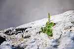 Plant grows on a white house in Chefchaouen.