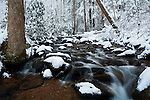 A heavy snow blankets Higgins Creek, Rocky Fork Tract, Cherokee National Forest