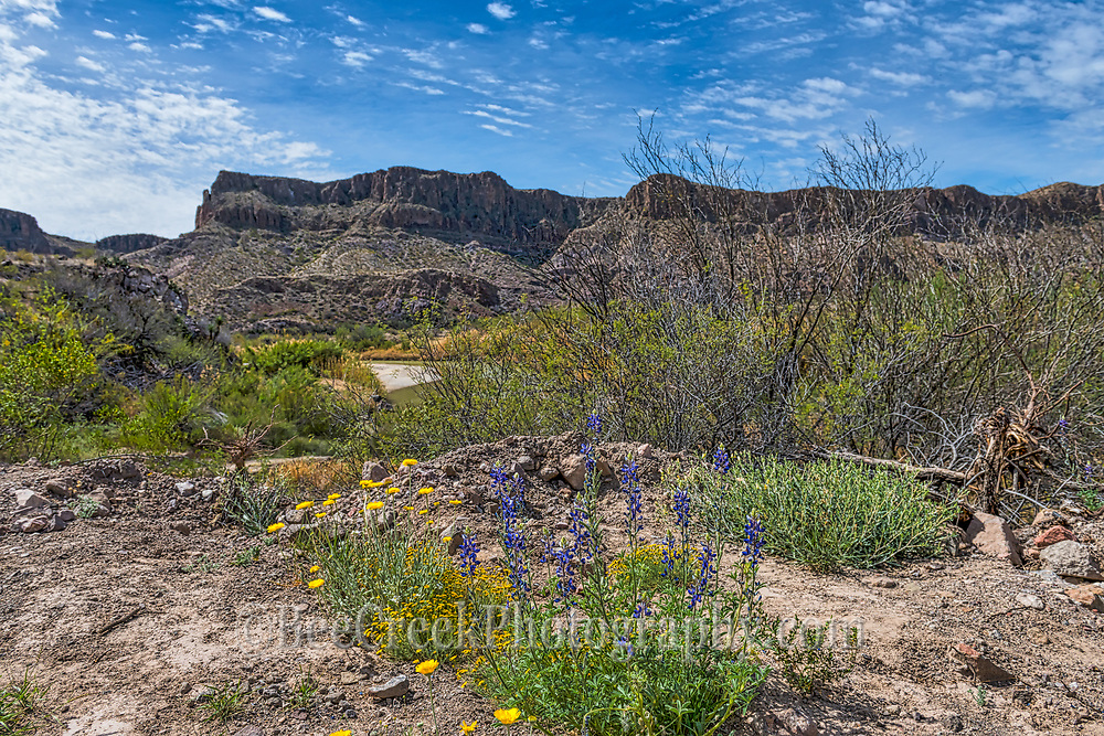 A patch of bluebonnets and small yellow wildflowrs grow along the edge of the Rio Grande in the Big Bend State Park.