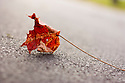 J. Houle, Autumn Leaf