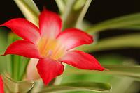 Close up tropical flowers