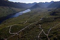 Logging roads zag through a clear cut on Admiralty Island,