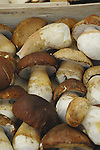 Brown mushrooms on market stall. viktualienmarkt, Munich, Bavaria.