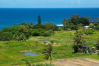 Ke'anae Peninsula taro (or kalo) farming, Maui.