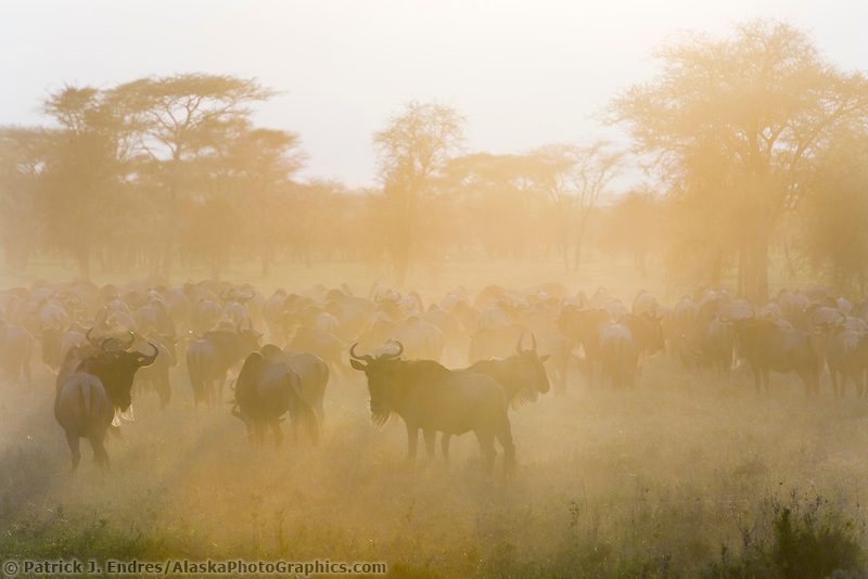 Serengeti National Park, Tanzania, East Africa