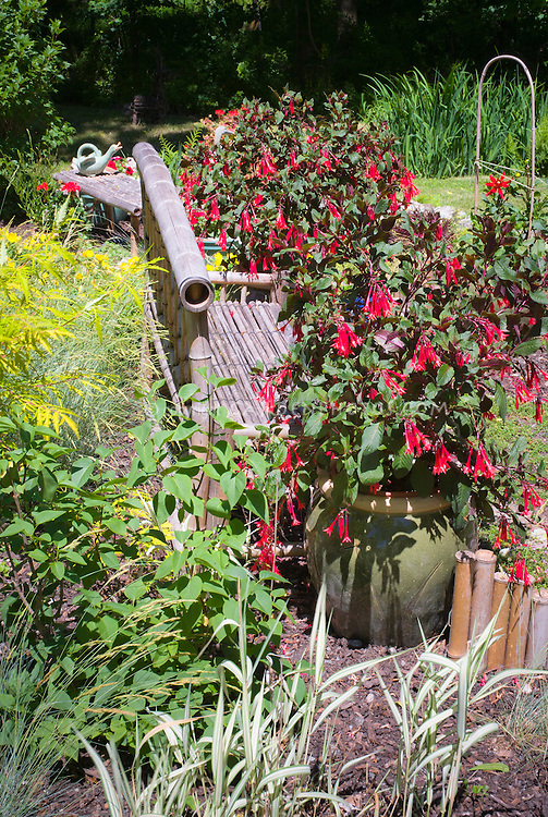 fuchsias in container pots plant flower stock photography gardenphotos
