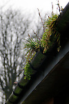 Europe, UK, England, Hertfordshire, Bushey. Green moss beckons spring.