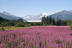 Alaska, Juneau: Mendenhall Glacier at Juneau.  Fireweed flowers.  .Photo #: alaska10001 .Photo copyright Lee Foster, 510/549-2202, lee@fostertravel.com, www.fostertravel.com.