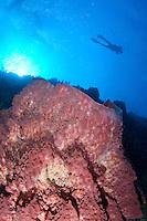 Diver silhouette<br /> Carabinero dive site, Isla Mona<br /> Puerto Rico
