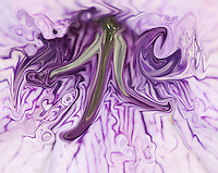 floating abstract shape in dark violet background around, becoming more and more light when far from center. Violet shades. Abstract non objective photography, colors of the nature. Fine art photography.Modern art. Printed size 4x6 inches on metal