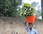 A woman carries home the harvest in the Congolese town of Kananga.