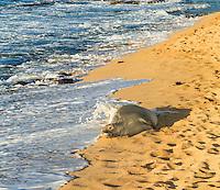 A resting Hawaiian monk seal gets splashed by a wave at Ho'okipa Beach on Maui.