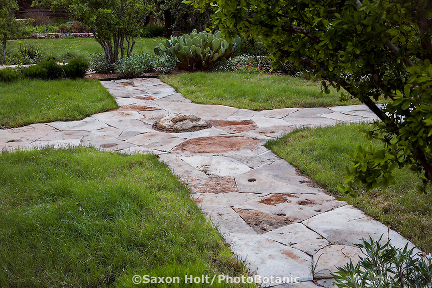 Buchloe dactyloides, Buffalo grass 'Turffalo' low water drought tolernat lawn with stone garden path; Lady Bird Johnson Wildflower Center