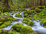 Cascading stream, Olympic National Park, Washington, USA