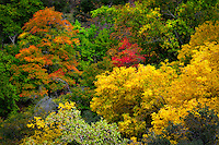 Tapestry of fall color