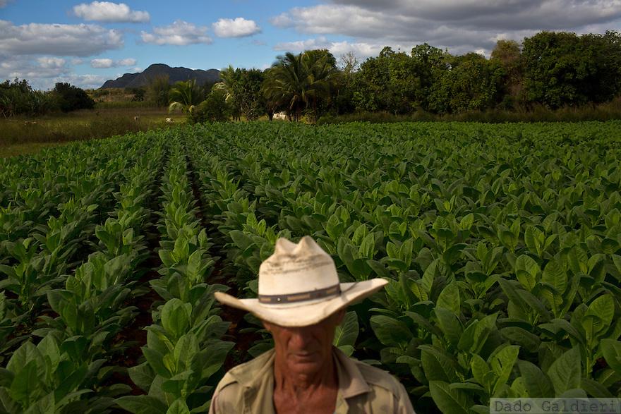 Cuba's Tobacco Culture