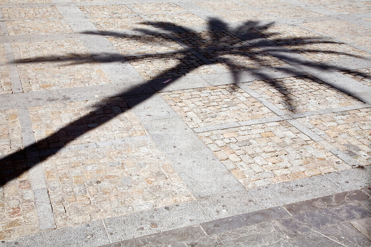 Graphic image of the long shadow of a tall palm tree on a cobblestone pavement.