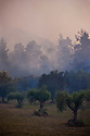 Olive groves threatened by a forest fire burning near Ancient Olympia;