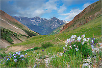 On the Silver Creek Trailhead that leads to two of Colorado's 14ers, this Colorado landscape looks back at the trail that rises up from the valley. I was on my way back to the campsite when I paused to take this image of Columbine along the path. The storm clouds were building and it wasn't long before the hail and rain came. Fortunately, I was about 1/10 of a mile from camp when the deluge began. This Colorado wildflower image comes from the San Juan Mountains near Lake City.