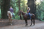 Horseback riding in coast redwoods at Henry Cowell Redwoods State park