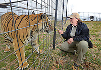 NWA Democrat-Gazette/BEN GOFF -- 03/09/15 Emily McCormack, curator of Turpentine Creek Wildlife Refuge, plays with Ringo, one of the many rescued tigers at the facility near Eureka Springs, while posing for photos on Monday Mar. 9, 2015.