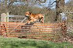 Windsor Dog Trials  20th April 2013