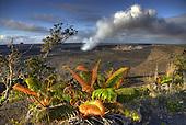 Halema'uma'u crater with rising volcanic ash cloud at Hawai'i Volcanoes National Park, Big Island of Hawai'i; native 'ama'u ferns grow in the foreground.