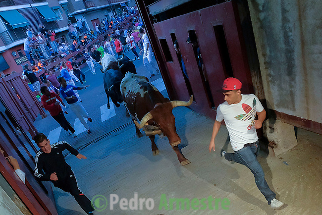 Participants run in front of Juan Albarran's bulls during the first bull run of the San Sebastian de los Reyes Festival, near Madrid, on august 26, 2014. © Pedro ARMESTRE