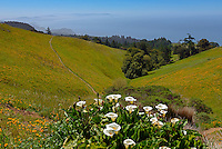 Spring View, Mt. Tam