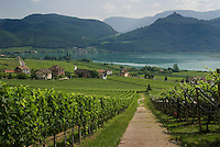 Bolzano, South Tyrol, June 2007. The Vineyards around lake Kaltern See. The hills around Bolzano are home to most of the wine production in region of South Tyrol. South Tyrol used to be part of Austria until it became part of Italy after WWI. Photo by Frits Meyst/Adenture4ever.com