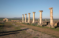 The Decumanus Maximus or Main Street, with the Ionic columns of the Forum or marketplace and in the distance the Triumphal Arch of Caracalla, built 217 AD by the city's governor Marcus Aurelius Sebastenus in honour of Emperor Caracalla, 188-217 AD, and his mother Julia Domna, Volubilis, Northern Morocco. Volubilis was founded in the 3rd century BC by the Phoenicians and was a Roman settlement from the 1st century AD. Volubilis was a thriving Roman olive growing town until 280 AD and was settled until the 11th century. The buildings were largely destroyed by an earthquake in the 18th century and have since been excavated and partly restored. Volubilis was listed as a UNESCO World Heritage Site in 1997. Picture by Manuel Cohen