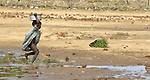 A boy runs through the Habile Camp for internally displaced Chadians outside the village of Koukou Angarana. Some 25,000 people live in precarious conditions in this camp. More than 180,000 residents of eastern Chad have been displaced by violence spilling over from neighboring Darfur, inter-ethnic conflict, and fighting between rebels and the Chadian government.