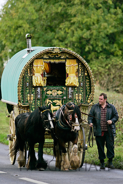Shire horses pull one hundredyear-old gypsy caravan through country lanes, Stow-On-The-Wold, Gloucestershire, United Kingdom