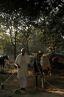 A horse owner with his horse at Sonepur fair ground. Bihar, India, Arindam Mukherjee.