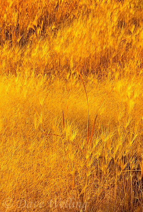 761950091 backlit fall grasses along the south shore of mono lake in mono lake state park mono county california