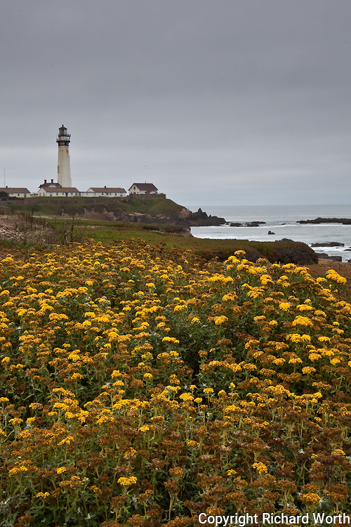 Pigeon Point Light Station with yellow wildflowers in the foreground.