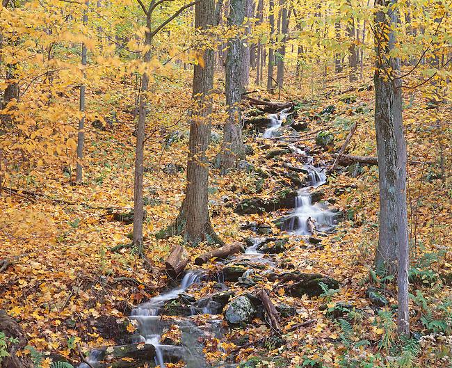 meandering creek through autumn forest, Upstate New York