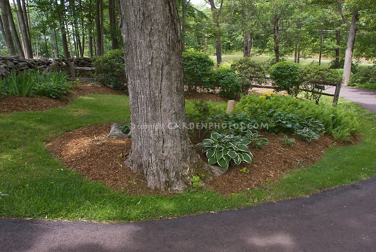 Planting Under Pine Trees : Planting under a high branched tree plant flower stock