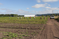 Tahoma Farms, Orting, Washongton, Organic Farm